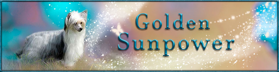 Golden Sunpower - Heedbild