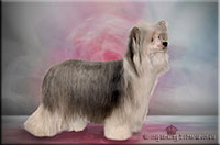 "Insolente Little Champs ""Lilly"" -  Chinese Crested Dogs, female"